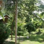 thailand-accommodation-garden-suites-157
